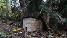 Domki dla jeży (PAP/Jacek Bednarczyk)
